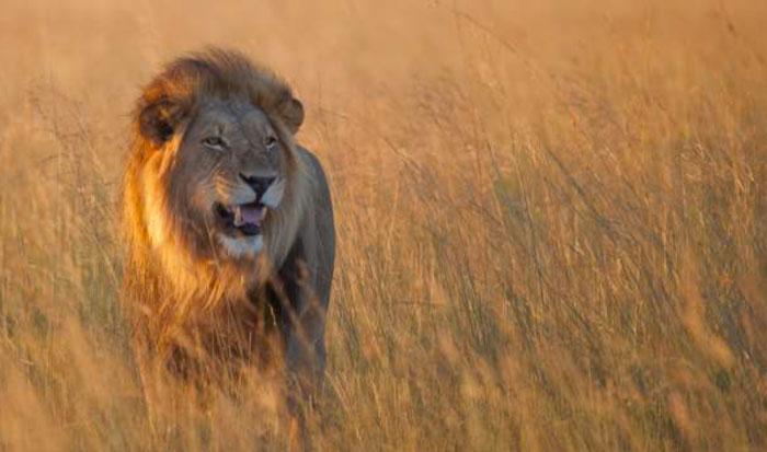 ©Egil Droge/African Parks