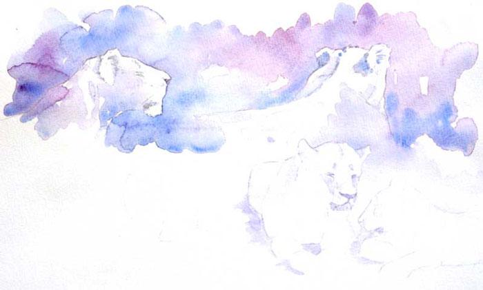 Lion field sketches by Alison Nicholls