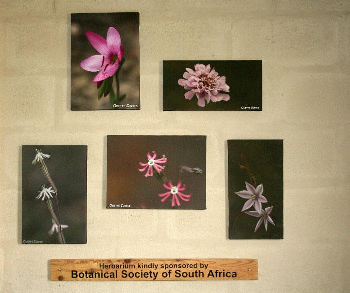 BotSoc-Herbarium