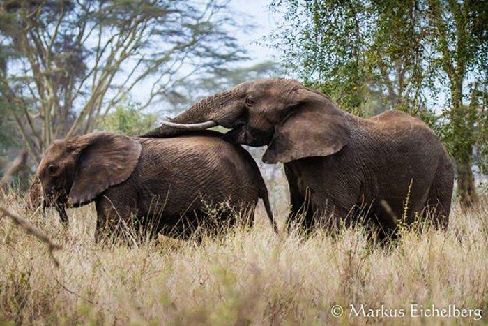 Elephants-Ecotraining
