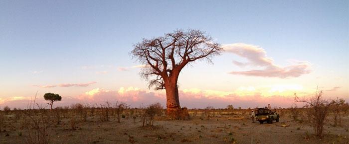 Evening-drinks-Baobob-Tree