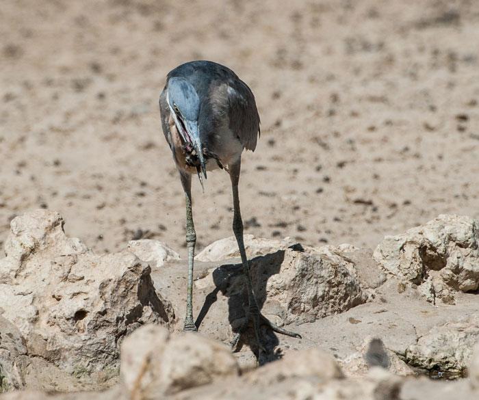 Heron-corlette-wessels