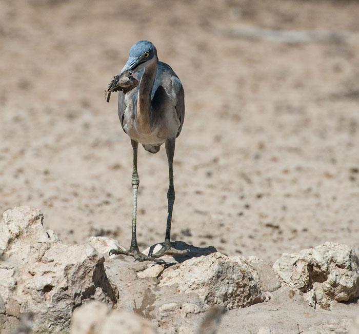 Heron-dam-fishing