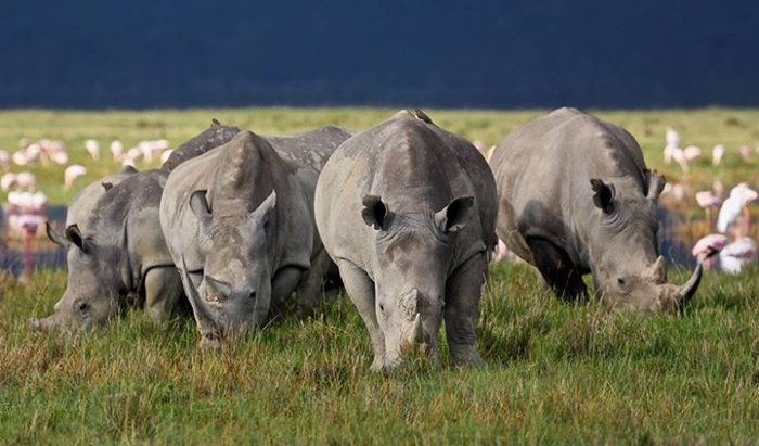 world rhino day photo competition winners africa geographic