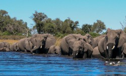 chobe-wildlife-photography-course-2