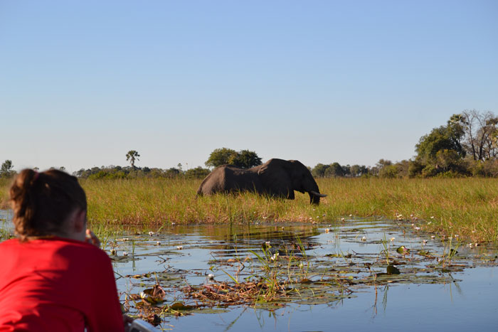 elephants-okavango