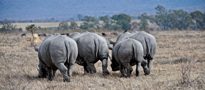 global-rhino-march