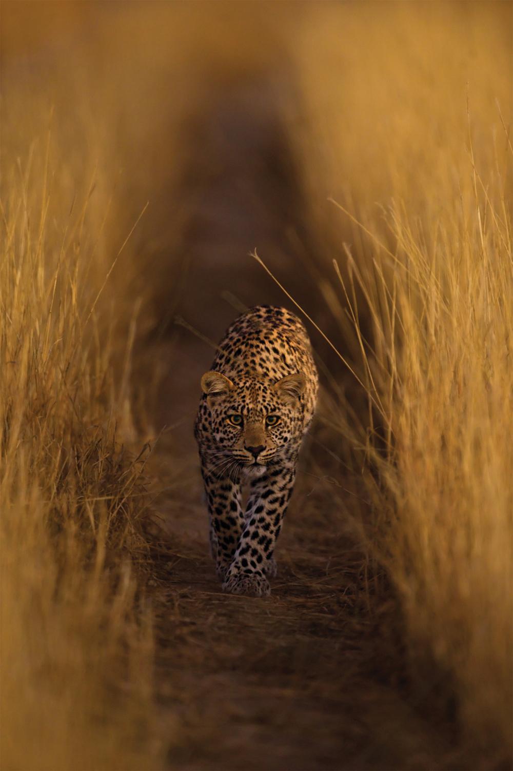 leopard-2-hannes-lochner