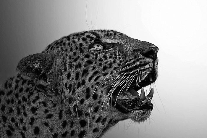 timbavati-photo-safari
