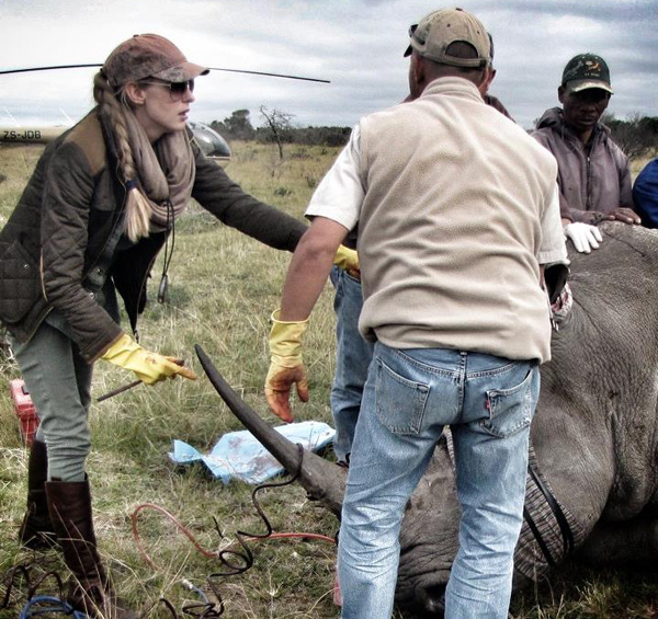 Lorinda Hern and team at a horn infusion. © The Rhino Rescue Project