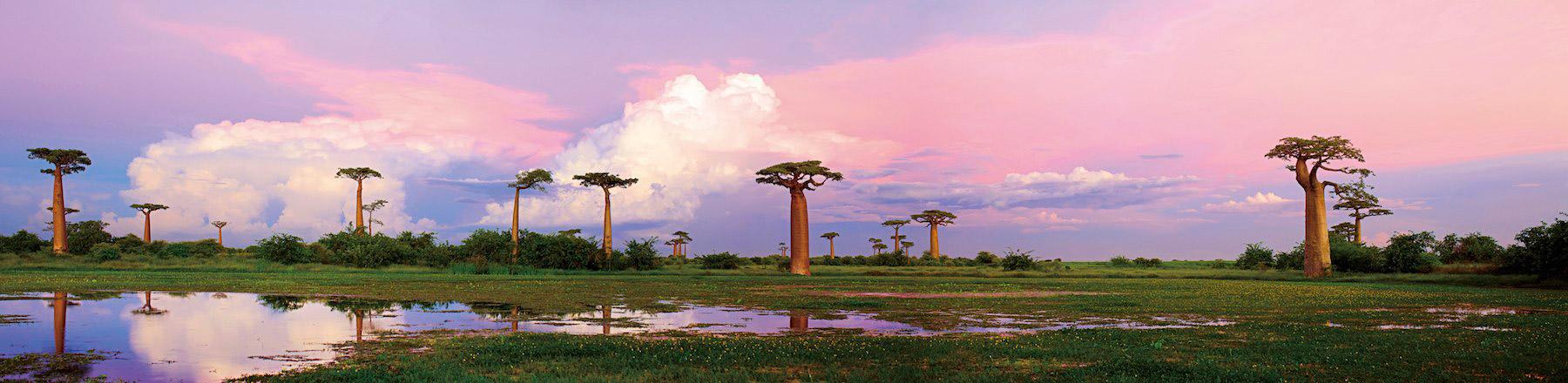 Baobab-panoramic2-madgascar-heinrich-van-den-berg