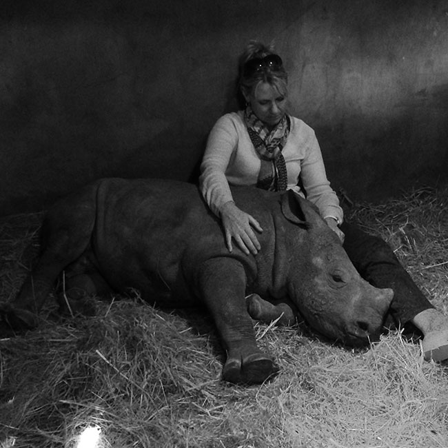 The orphaned baby rhino with his surrogate mother - an integral part of the animal's survival and wellbeing
