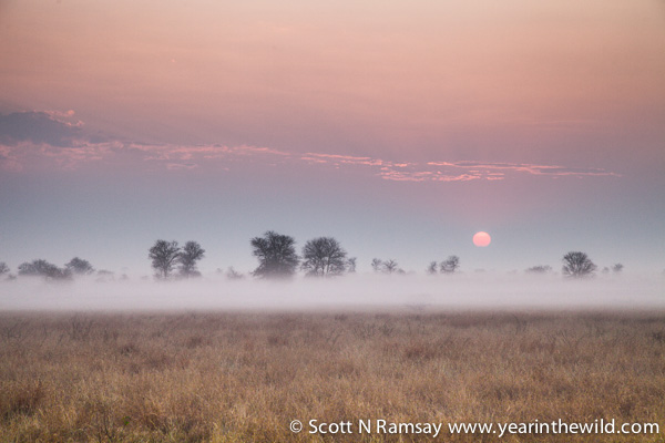 Satara savanna woodland, sunrise, mist clearing. One of my favourite sights in Kruger. © Scott Ramsay