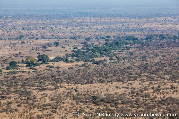 Looking out from Nkumbe View Point, just south of Tshokwane Picnic Site. This is one of the better views in Kruger, so enjoy it, because views in this largely flat national park are hard to come by. © Scott Ramsay