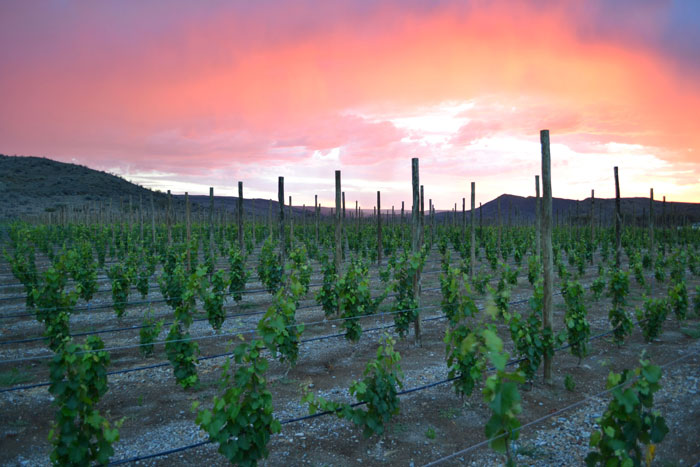 Neuras-Sunset-wine-farms