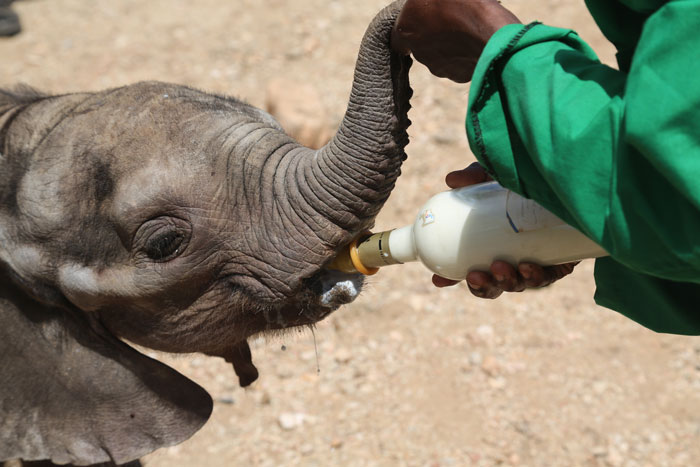 © David Sheldrick Wildlife Trust