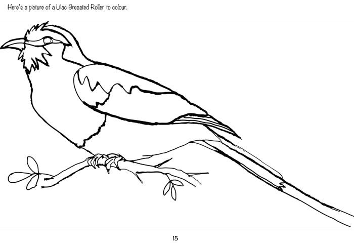 colouring-in-bird