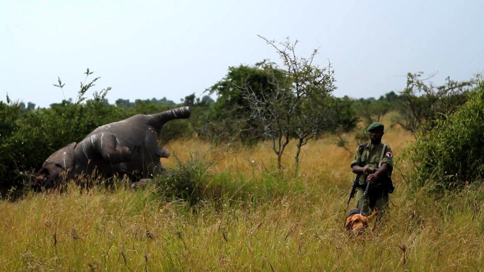 congo-hound-elephant