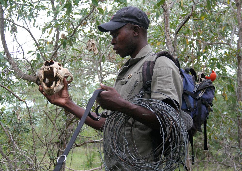 k9-conservation-lion-skull