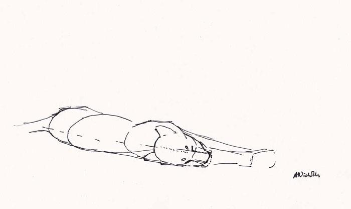 lion-field-sketch