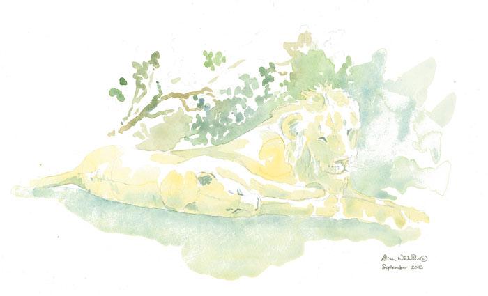 lion-watercolour