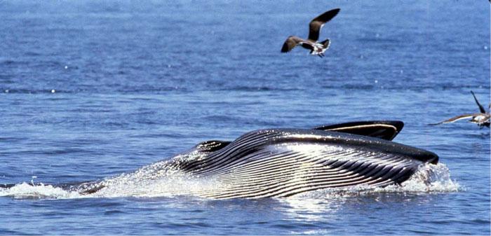 whale-watching-safari
