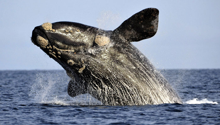 whale-watching-south-africa