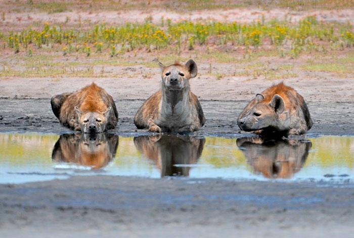 © Dale Morris/ African Parks