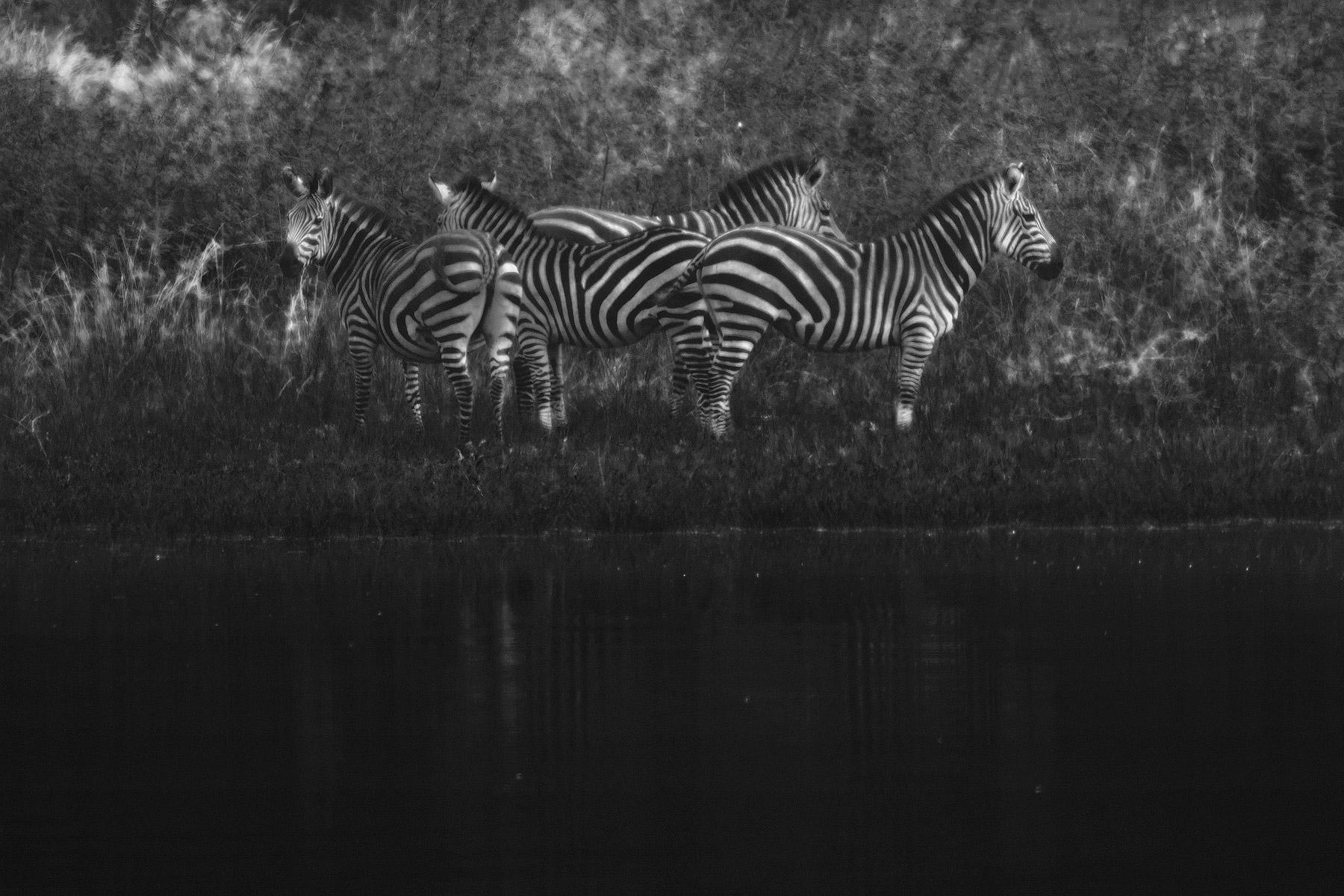 RWANDA_zebras_akagera