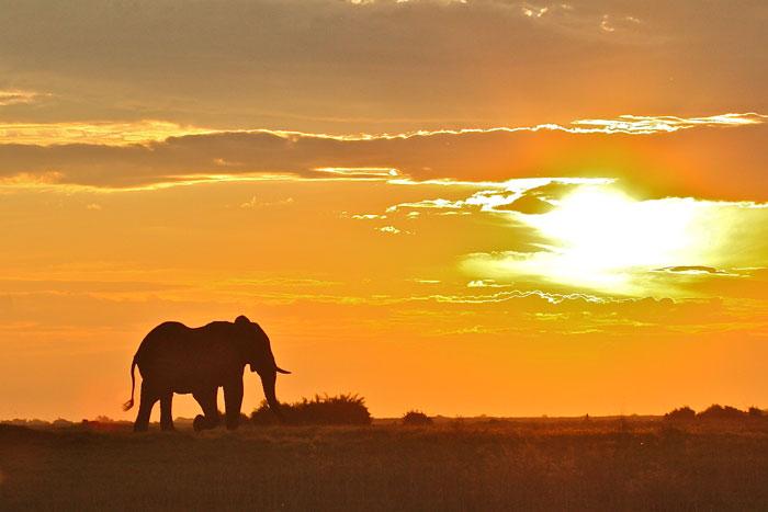 Sunset-silhouette-Francis-Garrard