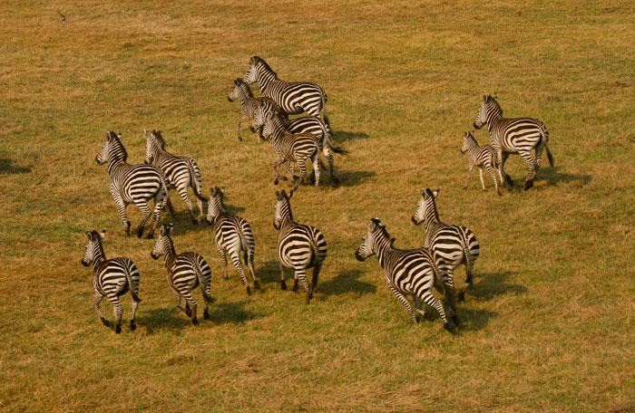 © Frans Schepers/ African Parks