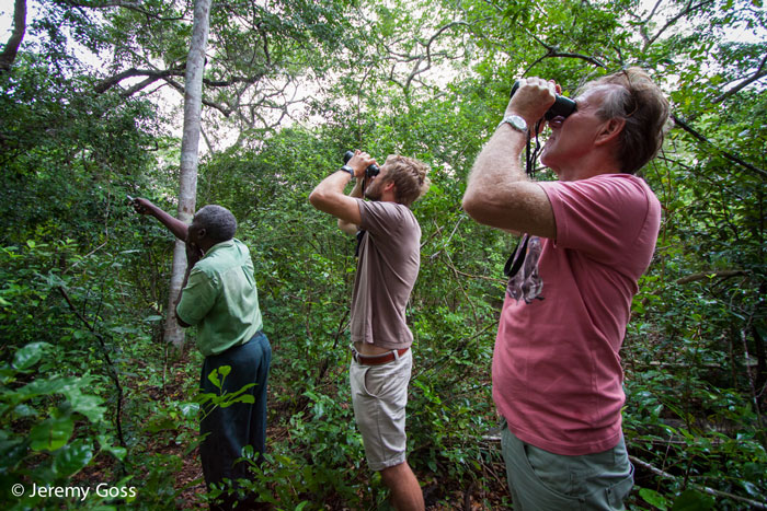 The Arabuko Sokoke Forest is considered the second most important forest on the African mainland for bird species in terms of species diversity and uniqueness.