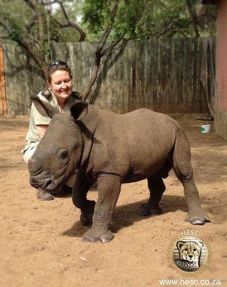 baby-orphan-rhino