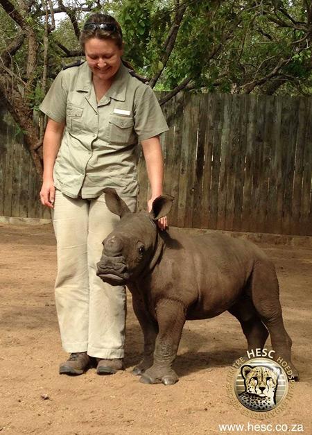 baby-rhino-rescue