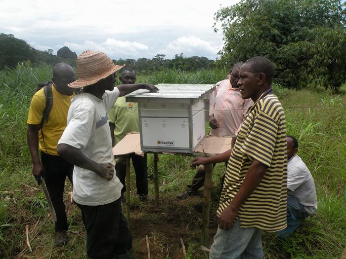 bee-hive-community