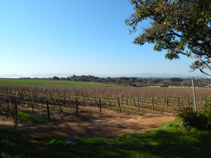 cape-winelands-vineyards