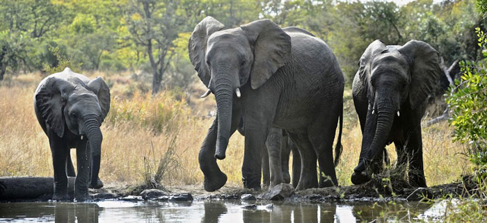 © Dex Kotze/Youth 4 African Wildlife