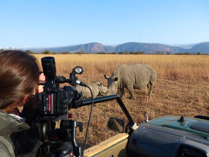 filming-rhinos