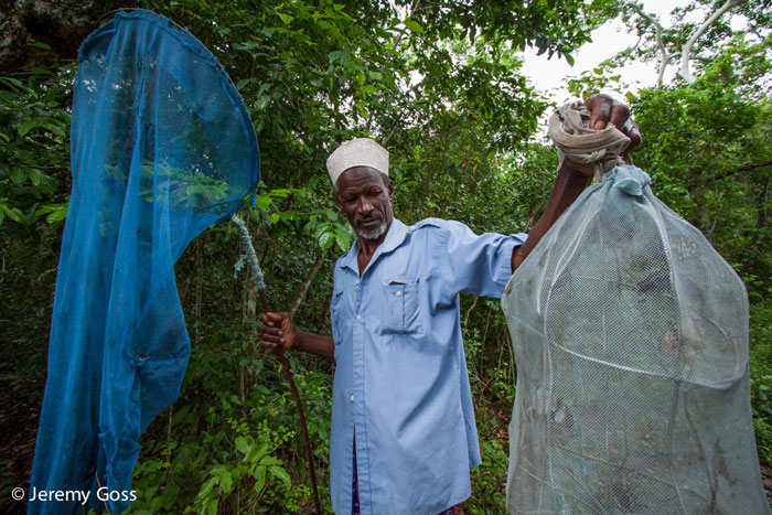 Members of the local communities are able to take advantage of income generating activities in the forest, such as this butterfly collector.