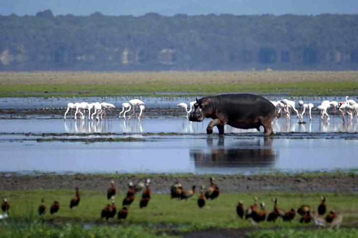 iSimangaliso-Wetland-Park-Hippo-and-Lake