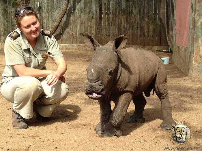 rescued-baby-rhino