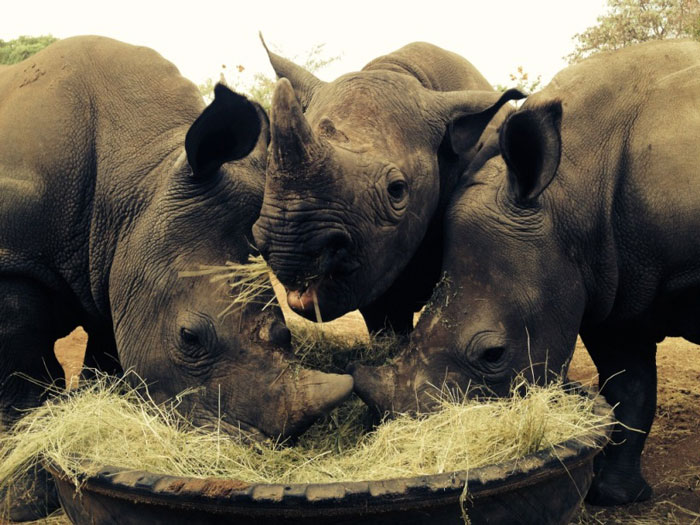 rhino-orphans-of-Limpopo