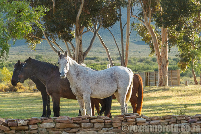 roxanne-reid-horse-riding-Karoo