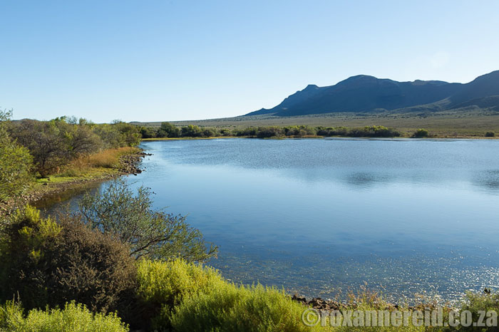 roxanne-reid-river-Karoo