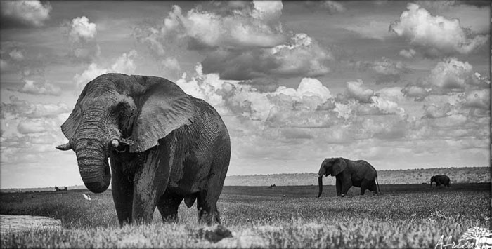 Africa-Photography-Corlette-Wessels-elephant