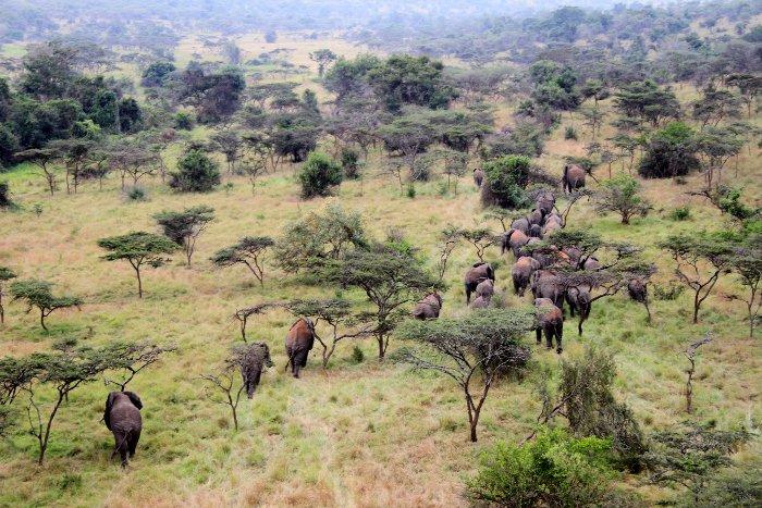 © Bryan Havemann/ African Parks