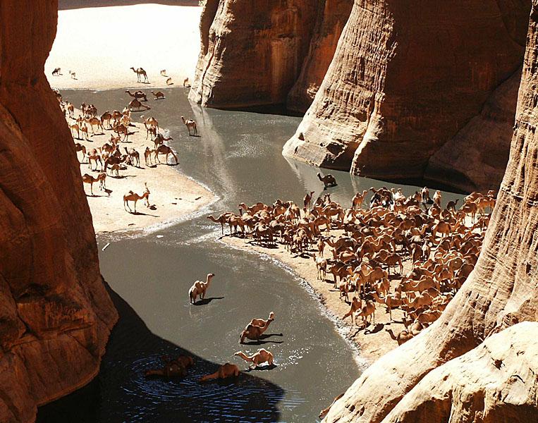GueltaCamels