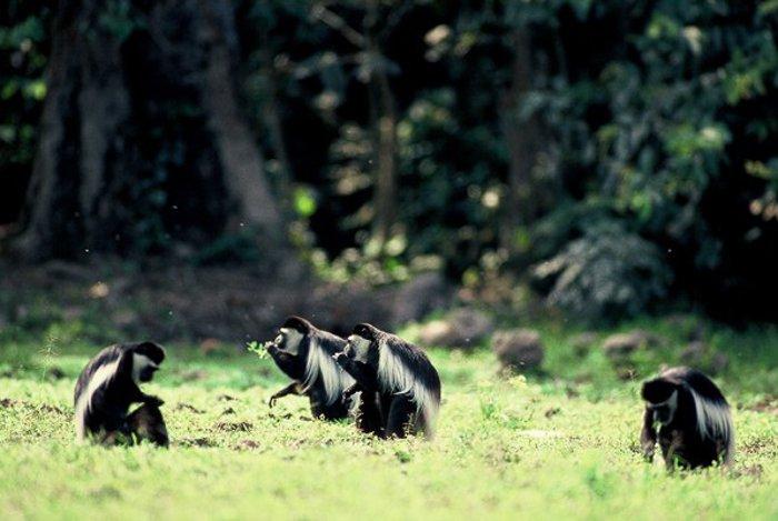 © Bruce Davidson/ African Parks