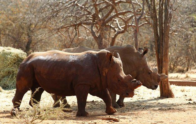 © Siphiwe Sibeko / Reuters