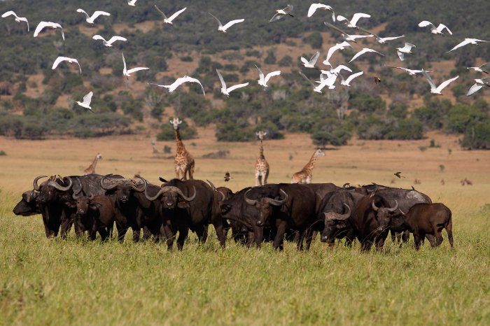 © Stephen Cunliffe/ African Parks